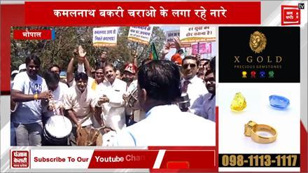 कांग्रेस सरकार के खिलाफ BJP का प्रदर्शन, लगाए कमलनाथ बकरी चराओ के नारे