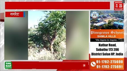 Sad Sunday , गगरेट  में सड़क हादसे में युवक की मौत