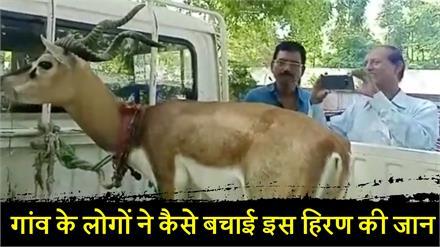 देखिए गांव के लोगों ने कैसे बचाई इस हिरण की जान...