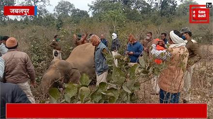 खिरहनी घाट पर हाथी की मौत, वन विभाग ने साधी चुप्पी