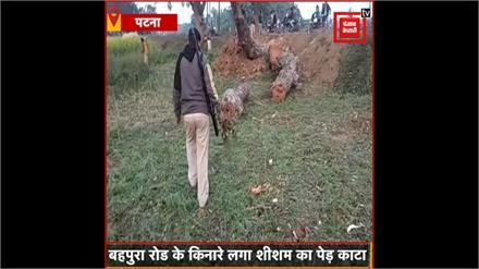 #Patna में हो रही trees की अंधाधुंध कटाई,सरकारी जमीन में लगा Sheesham का पेड़ काटा