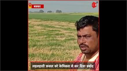 #BUXAR: दबंगों ने 120 बीघे में खड़ी फसल को केमिकल से किया बर्बाद, पीड़ित किसानों को धमका रही है पुलिस