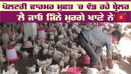Poultry Farmsमें मर रहे मुर्ग़े , महामारी फैलने का डर