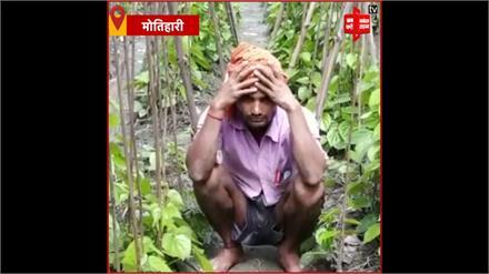 मीठा पत्ता पान की खेती करने वाले किसान हुए बदहाल, लॉकडाउन की वजह से पान की मांग में आई कमी
