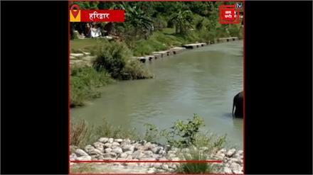Haridwar:गंगा नदी के पास मिला मदमस्त हाथी,घंटों तक आराम से झूमता रहा