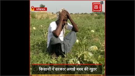 Lockdown:  खेत में तरबूज की फसल को खरीदने वाला कोई नही तैयार ,किसान है परेशान