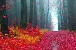 दुनिया के सबसे रहस्यमयी जंगल(Pix)