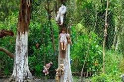 डरावना जंगल, जहां मौत को गले लगाने जाते हैं लोग!