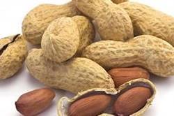 सर्दियों में मूंगफली खाने के है बड़े फायदे