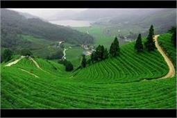 दुनिया भर में मशहूर हैं चाय के ये खूबसूरत बागान