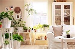 प्रदूषण से बचने के लिए घर में लगाएं ये पौधे
