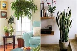 Decoration Ideas! घर की शोभा बढ़ाते हैं ये 8 पौधे