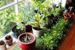 घर में ये पौधे लगाकर हवा को करें शुद्ध