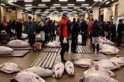 विश्व की सबसे बड़ी फिश मार्किट, करोड़ों में बिकती हैं मछलियां!