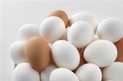 अंडा सही हैं या खराब, इन तरीकों से करें जांच