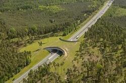 जानवरों की सेफ्टी के लिए बनाए गए हैं ये Animal Bridges