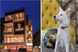इंसानों का नहीं, कुत्तों के लिए खुला है ये लक्जरी होटल !