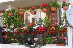मौसम के हिसाब से लगाएं फूल, महक उठेगा घर