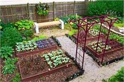 होम गार्डन में भूलकर भी न लगाएं ये 5 पौधे, होते हैं जहरीले