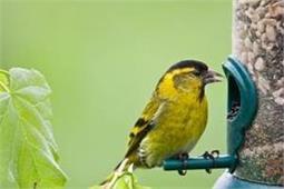 Bird Feeders ऐसे रखें साफ, पक्षी रहेंगे सुरक्षित