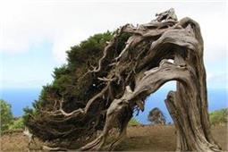 तस्वीरों में देखें, दुनिया के इन अजीबो-गरीब पेड़ों का नजारा