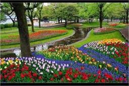 Tulip Festival: भारत के इस सबसे बड़े गार्डन में लें 17 लाख फूलों का मजा