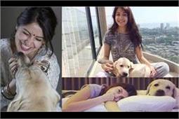 इंसानों से ज्यादा Dogs से प्यार करते हैं ये क्रिकेटर और फिल्मी सितारे