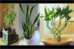 हेल्दी रहने के लिए घर में लगाएं ये 6 पौधे