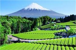 ये हैं दुनिया के सबसे खूबसूरत टी गार्डन्स, एक बार जरूर जाएं यहां
