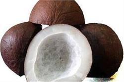 गर्भावस्था में खाएं सूखा नारियल, मिलेंगे ये 5 फायदे