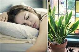 अगर आपको भी नहीं आती अच्छे से नींद तो बैडरूम में लगाएं ये 6 पौधे