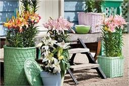 घर मे लगाएं ये 5 पौधे, नैगेटिव एनर्जी हमेशा रहेगी दूर