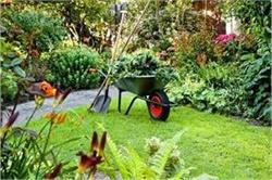 Gardening Tips: बगीचे से घास-फूस हटाने के लिए अपनाएं ये नेचुरल टिप्स