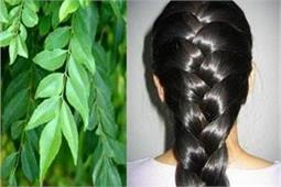 बालों को काला, घना बनाएं रखने के लिए इन तरीकों से इस्तेमाल करें करी पत्ते