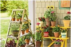 घर में लगाएं ये 5 पौधे, बीमारियों को कहे बाय-बाय