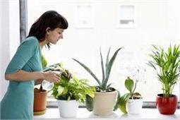 घर के अंदर का वातावरण भी रहेगा शुद्ध अगर लगाएंगे ये 7 पौधे