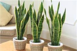 हवा को शुद्ध करने के लिए लगाएं ये 10 पौधे