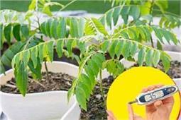 होम डैकोरेशन ही नहीं, डायबिटीज मरीजों के लिए भी फायदेमंद है ये पौधे