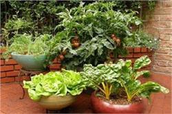 'केमिकल वेजिटेबल' को कहें ना और सिर्फ 30 दिनों में उगाएं ये सब्जियां