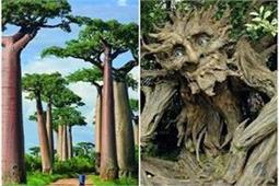 Natural Wonders: इन अजीबोगरीब पेड़ों को देखकर आप भी हो जाएंगे हैरान