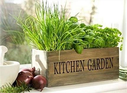 Indoor Garden: ठंडक व ताजगी के साथ Kitchen को मिलेगा यूनिक लुक