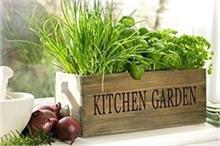 Indoor Garden: ठंडक व ताजगी के साथ Kitchen को मिलेगा यूनिक...