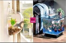 छोटे हो या बड़े, Aquarium डैकोरेशन के लिए देखें मजेदार...