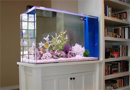 How to Decorate Your Aquarium