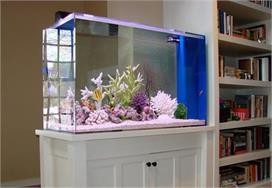 Aquarium डैकोरेट करने के लिए यहां से लें ढेरों आइडियाज