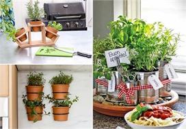 Organic Garden: स्पेस की कमी है तो किचन में यूं बनाएं Herbs...