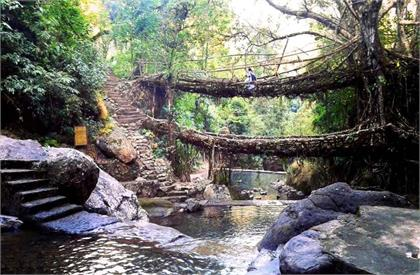 Double decker living root bridge in meghalaya