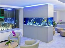 Double Sided Aquariums for home decor