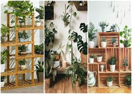 Indoor plants idea for home decoration
