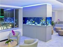 रूम डिवाइडर हो या डैकोरेशन, Double Side Aquariums का करें...